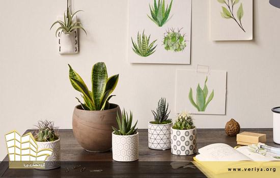 انتخاب گیاه مناسب برای دفتر کار